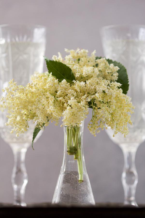 Sok od zove je okrepljujući, osvježavajući, domaći napitak od cvjetova istoimene biljke.